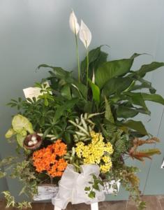 Garden Centre in Oshawa, Greenhouse in Oshawa, Flowers & Plants in Oshawa, Gardening in Oshawa, Florist in Oshawa