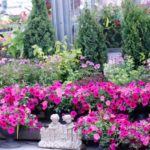 Beautiful Pink Flower Arrangements