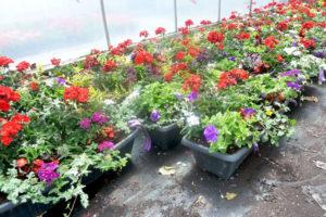 Long Planter Baskets
