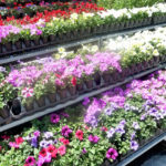 Garden Centre in Oshawa, Greenhouse in Oshawa, Flowers & Plants in Oshawa, Gardening in Oshawa, Florist in Oshawa